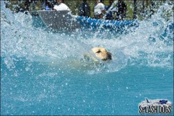 Splash Dogs