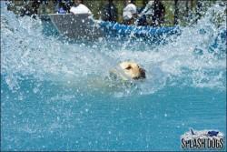 Splash Dogs